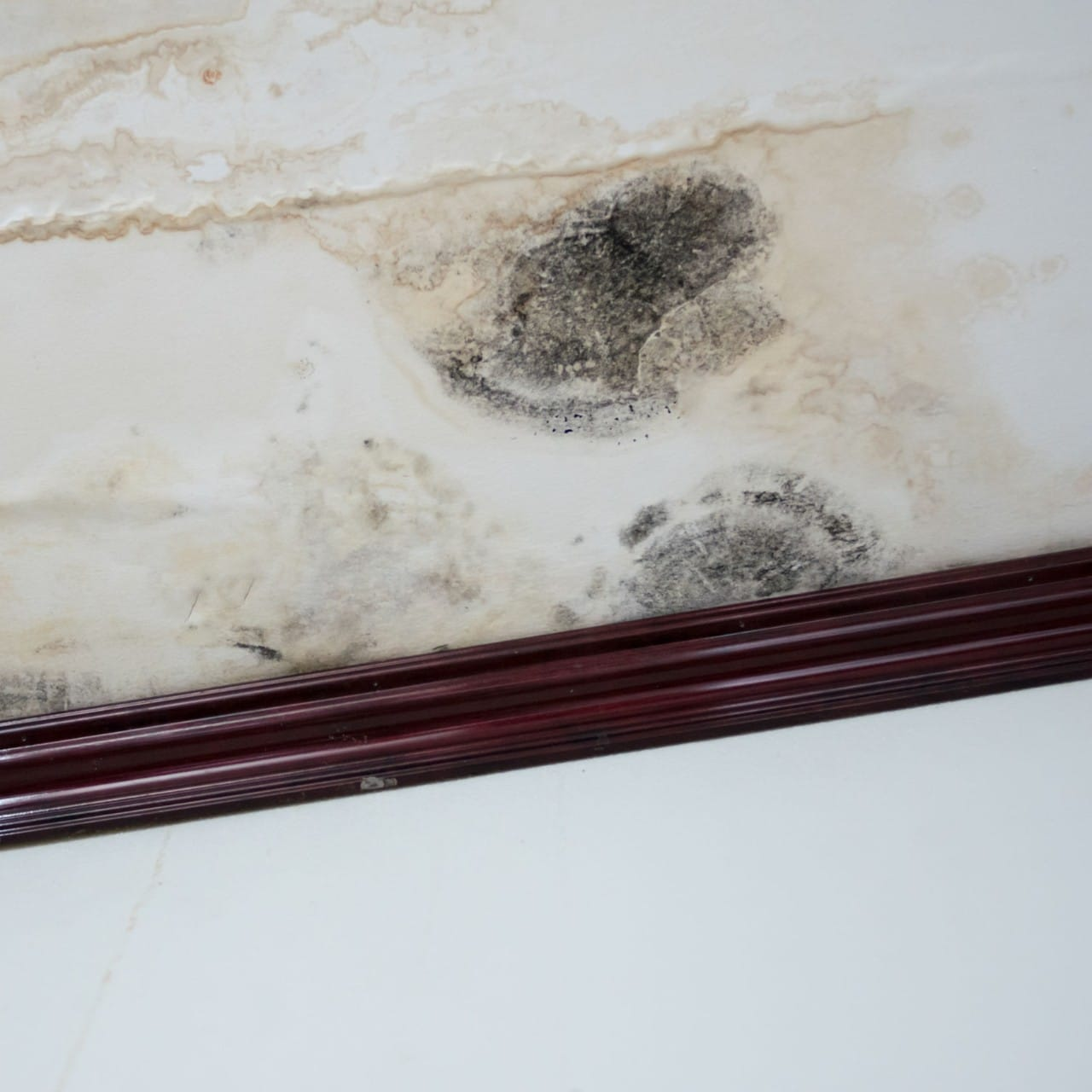 mold from leak on ceiling
