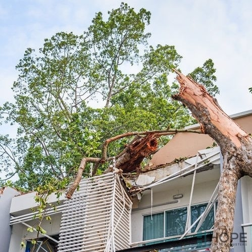 Fallen tree on the roof of a home.